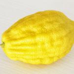 Set de 4 espèces pour Souccot Cedrat – Palmier – Myrthe – Saule